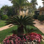 cycas garden design ibiza& formentera
