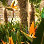 FIRAMACO + ENERGY 2018- jardines justo carbonell